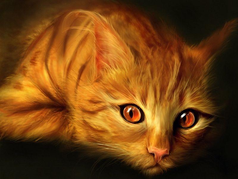 fondos de pantalla de Gato Naranja. wallpapers de Gato Naranja