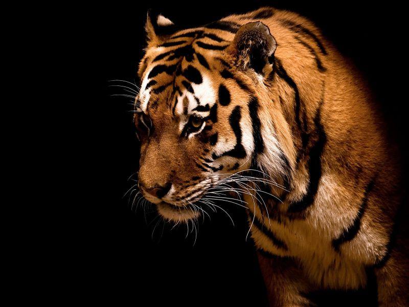 wallpapers de animales salvajes(HD)