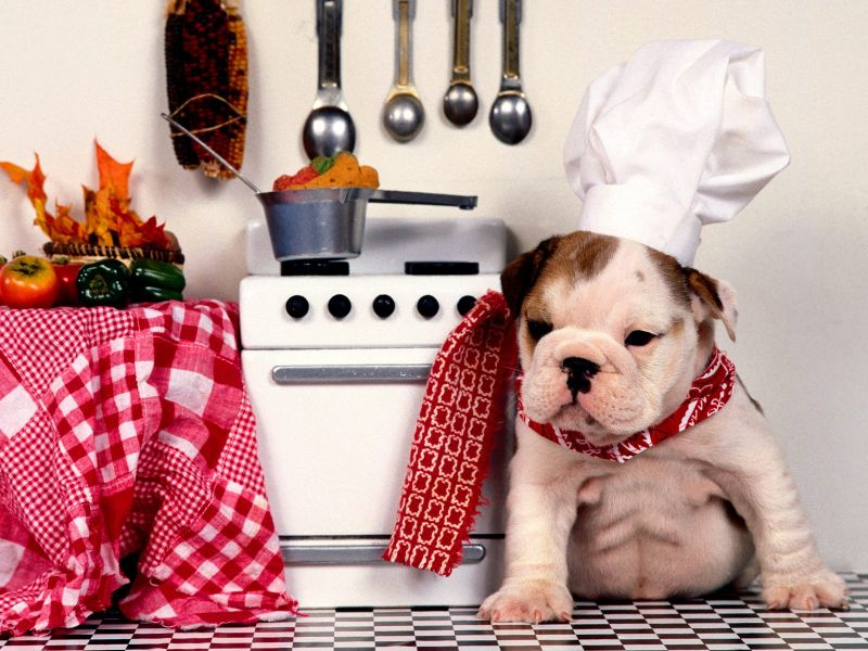 Fondos de Pantalla / Chistosos / Perro Chef