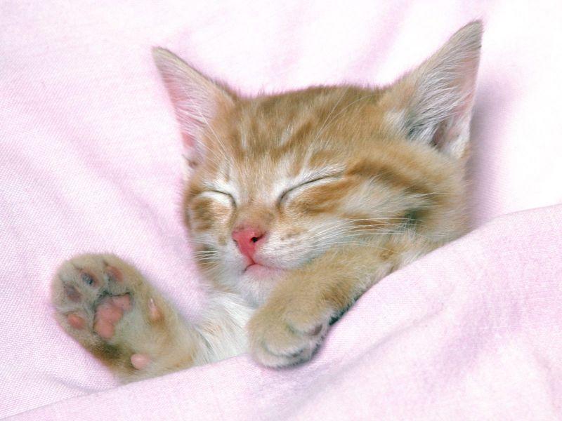 Fondos de Pantalla / Gatos / Bebe Gato