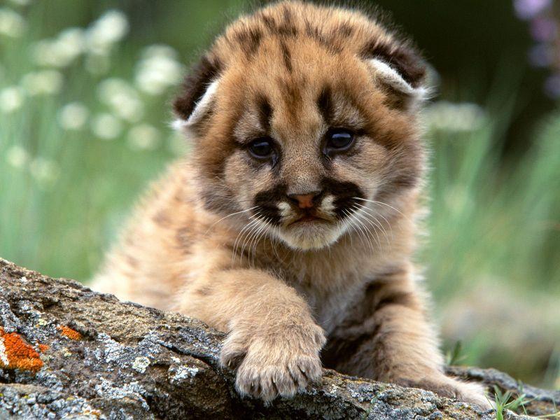 Animales bonitos que tan tiernos pueden ser