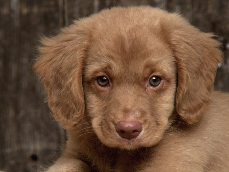 Perros de raza pequeña | Tus Cachorros