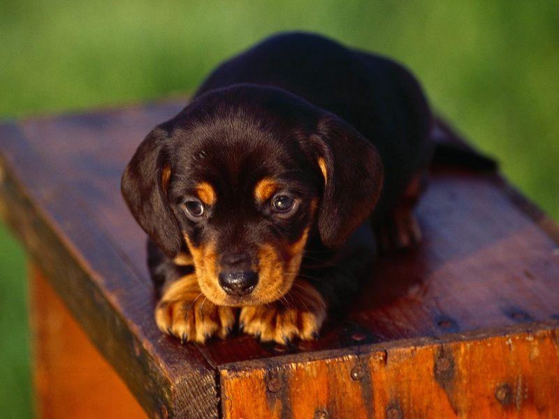 http://www.defondos.com/bulkupload/fotos-de-perritos/Animales/Perros/Perrito%20Tierno_800.jpg