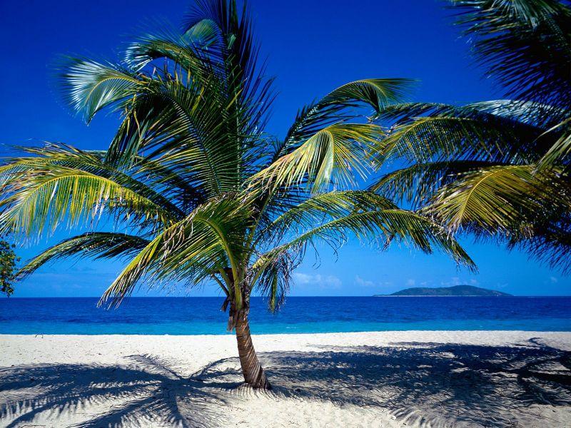 Palmeras de Playa