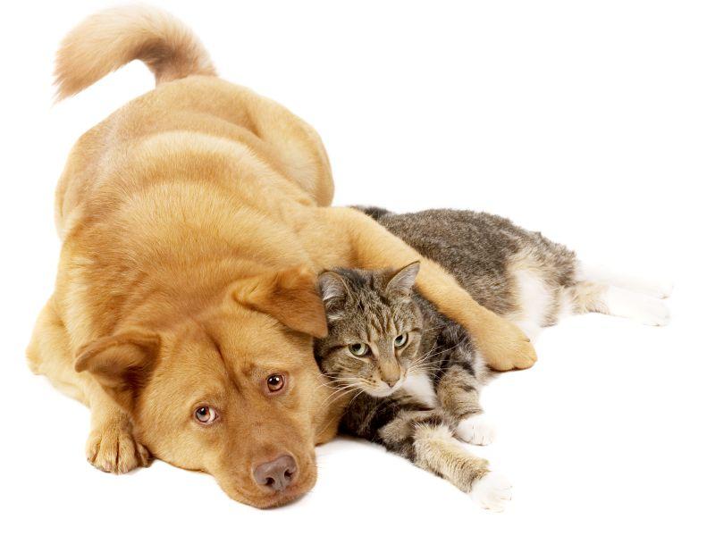 El Perro y Gato