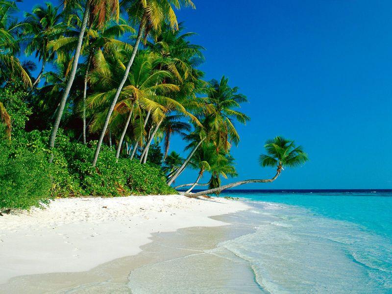 Fondos de Pantalla / Playas / Orilla de Playa