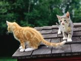 Gatos Explorando
