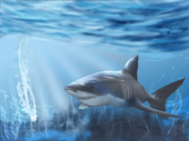 bitcoin trader tiburones