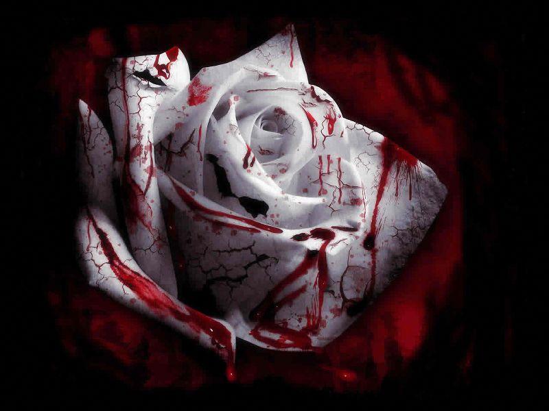 Sangrientas fondos de pantalla